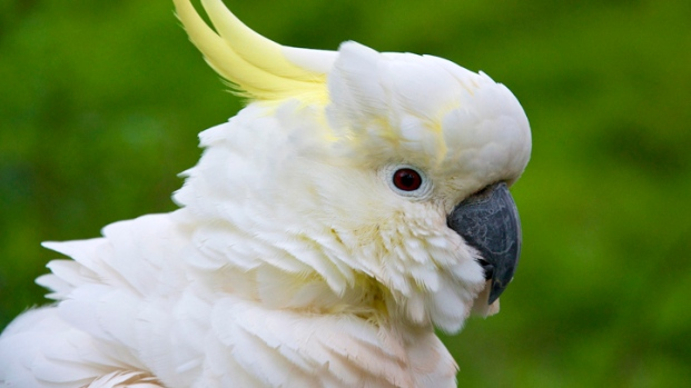 [NEWSC] Craigslist Cockatoo Case Cracked