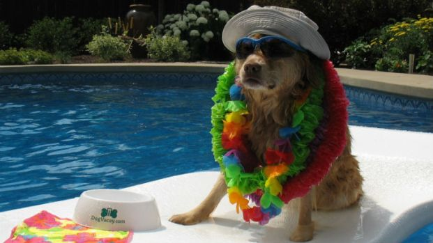 Dog Days of Summer: All Dressed Up