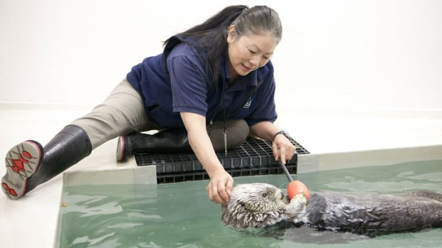 Photos: Shedd Aquarium's Kenai