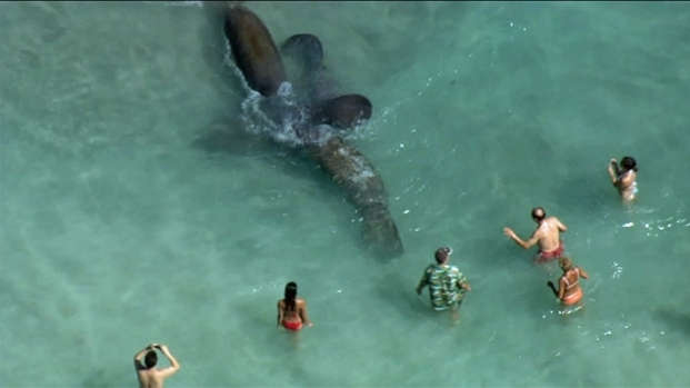 [MI] Manatees Gone Wild! Sea Cows Put on a Show in Hallandale
