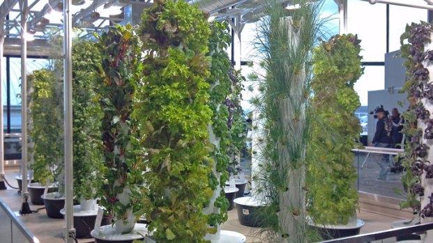 [CHI] O'Hare Creates Urban Garden