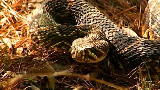 [NEWSC] Rattlesnake Rodeo