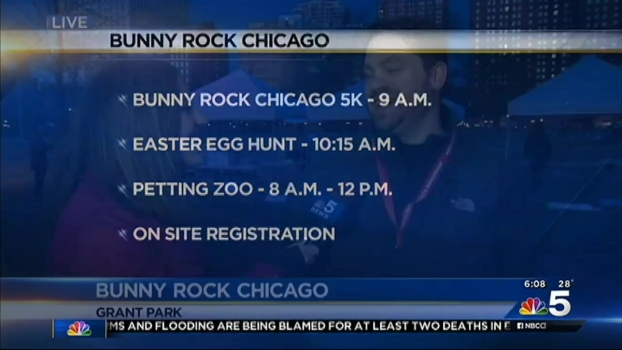 """""""Bunny Rock"""" Hops to Chicago"""