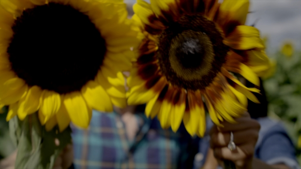 See the Gorgeous Sunflower Field Nestled in a Chicago Suburb