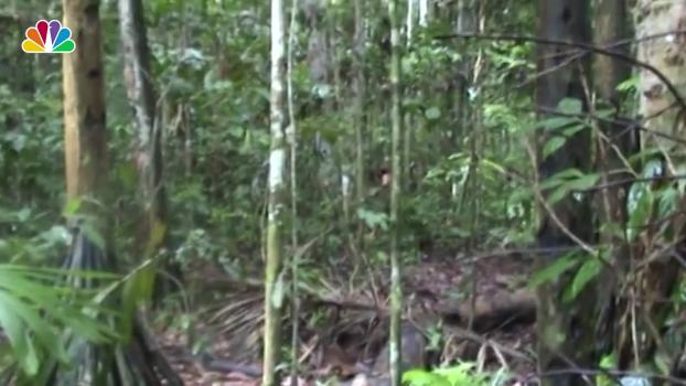 Rare Footage Shows Last Surviving Member of Amazonian Tribe