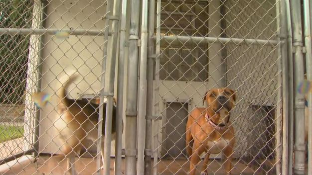 A Look at 'Clear the Shelters' Today in the Chicago Area