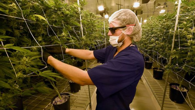 Marijuana Industry Sets Environmental, Ethical Goals
