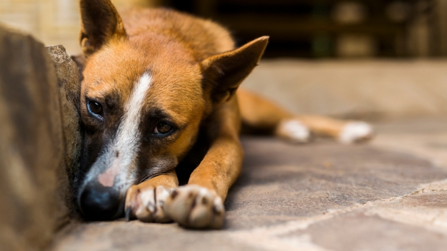 Dog Food Withdrawn Over Concerns About Euthanasia Drug}