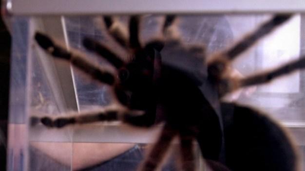 20 Exotic Animals Found in Michigan Home: Report
