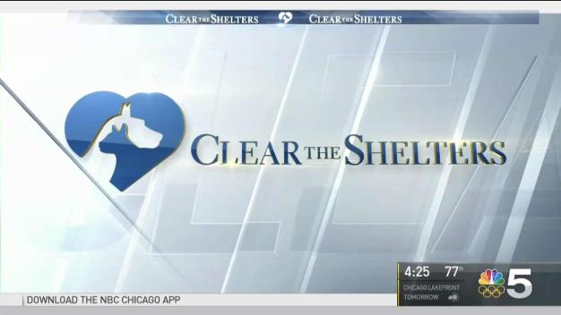 Clear the Shelters: Chicago's Anti-Cruelty Society