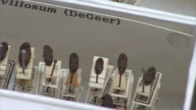 Field Museum Scientist Explains Wood Boring Insects