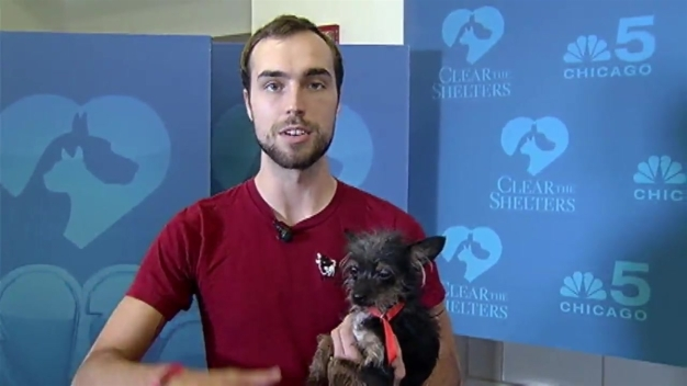 Clear the Shelters: Sunday, October 23, 2016