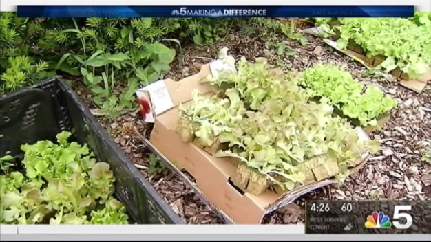 Educare Chicago Opens Vegetable Garden For 4th Year