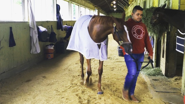 How Horses Train for the Races at Belmont