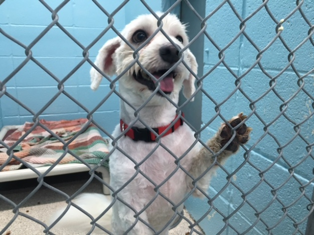 Clear the Shelters: Pets Find New Homes in the Chicago Area
