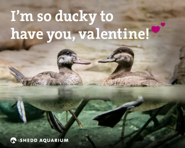 'I've Only Got Walleyes for You': Shedd Valentines
