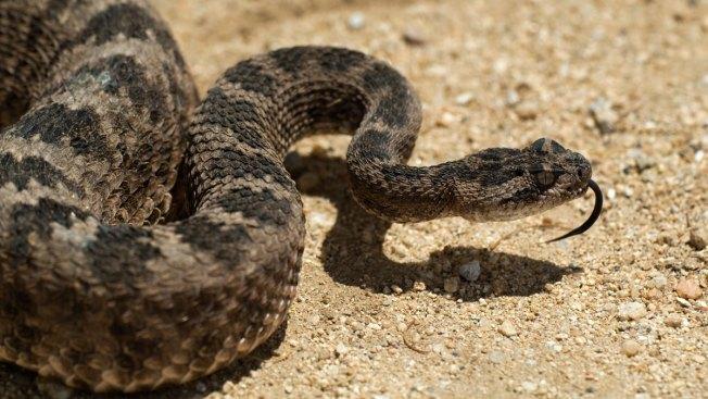 Residents Rattled, Mass. Drops Snake Island Plan