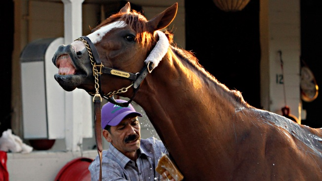 Derby Winner California Chrome Back in Action