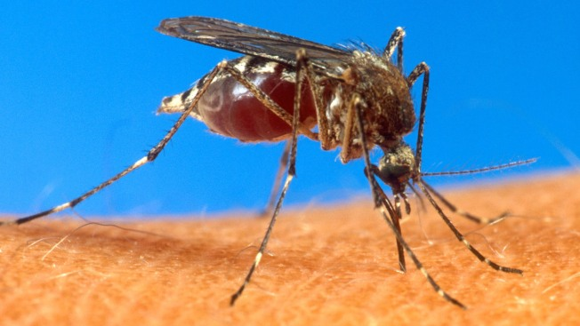 Indiana Residents Test Positive for Painful Mosquito Virus