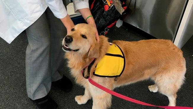 Therapy Dogs Can Spread Superbugs to Kids, Hospital Finds
