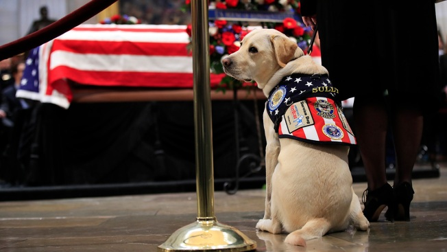 Statue of Late Bush's Service Dog Sully Commissioned