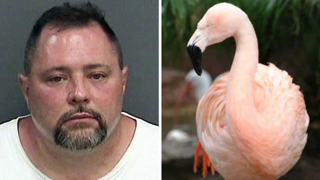 Man Accused of Fatally Injuring Busch Gardens Flamingo Hit, Killed by Truck