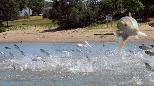 Army Corps of Engineers Approves $778M Plan to Block Asian Carp