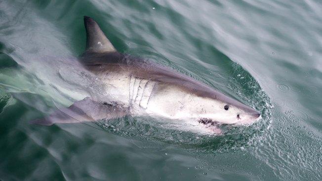 10-Year-Old Boy Bitten by Shark in Fla.