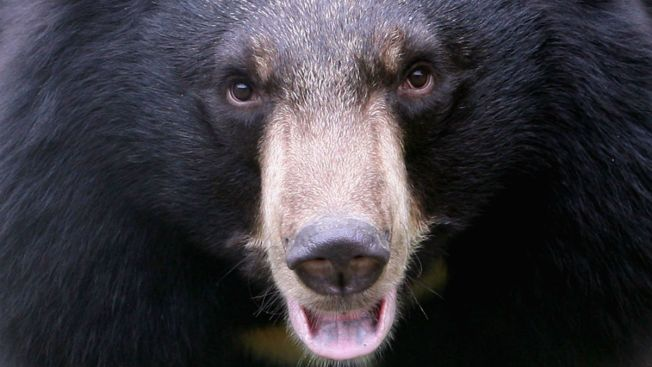 Man Steps Outside, Finds Bear Standing Next To Him