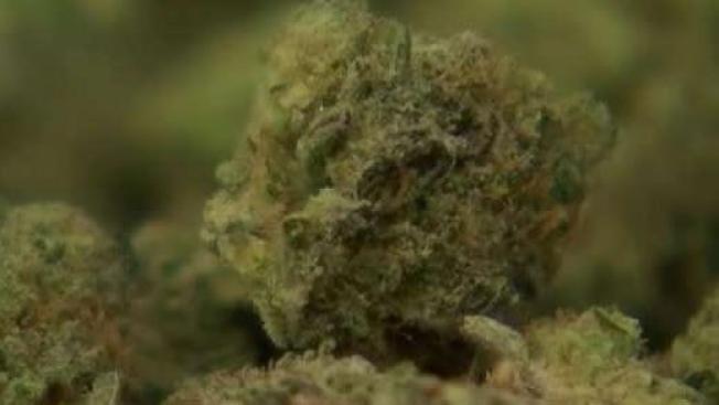 Fines Drop, Auto Seizures End Under Chicago's New Cannabis Proposal