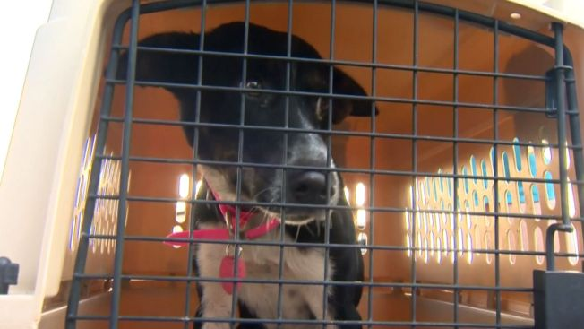 Aldermen Push for 'No-Kill' Animal Shelters Throughout City