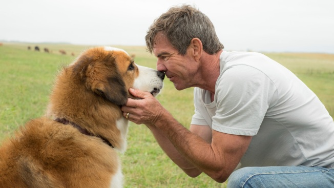 'A Dog's Purpose' Opens to $18.4 Million Amid Controversy