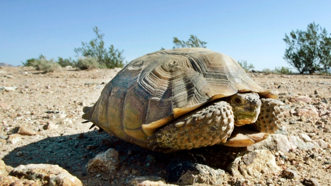Two-Week Search for Ohio Tortoise May Have Saved Owner's Sister