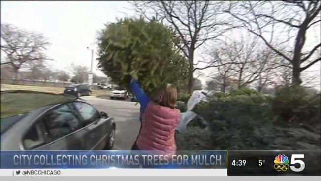 Christmas Tree Recycling Program - Chicago Offers Christmas Tree Recycling Program At Area Parks - NBC