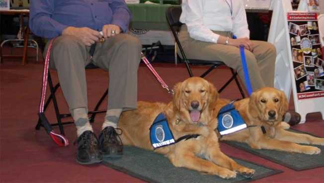 Local Comfort Dogs Helping Out in Newtown