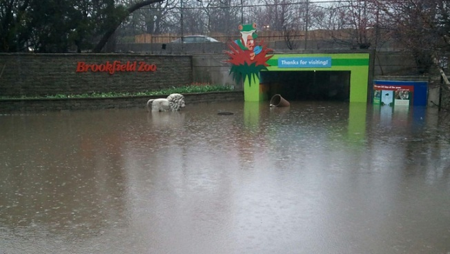 Flooding Closes Brookfield Zoo - NBC Chicago