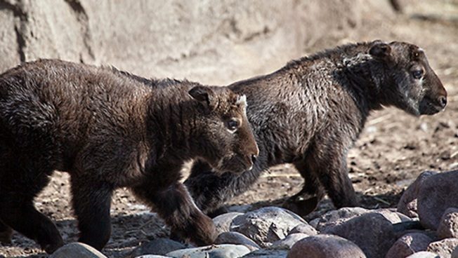 Naming Contest Launched For New Zoo Arrivals