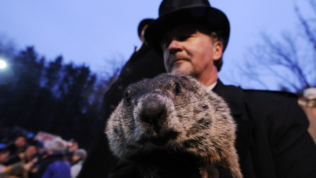 Ohio Prosecutor Wants to Off Punxsutawney Phil