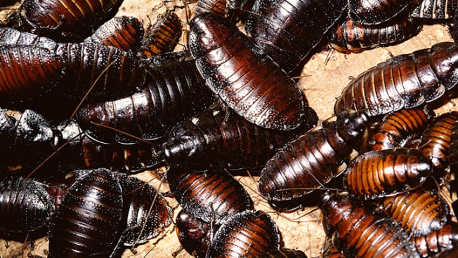 Suit Claims Roaches Found Inside Vending Machine Coffee