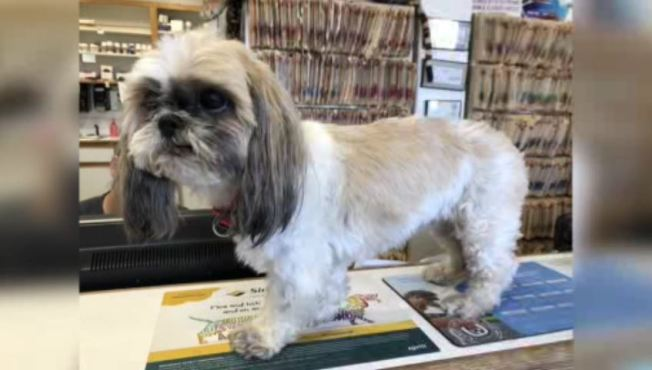 Dog Missing for Four Years is Back Home for the Holidays