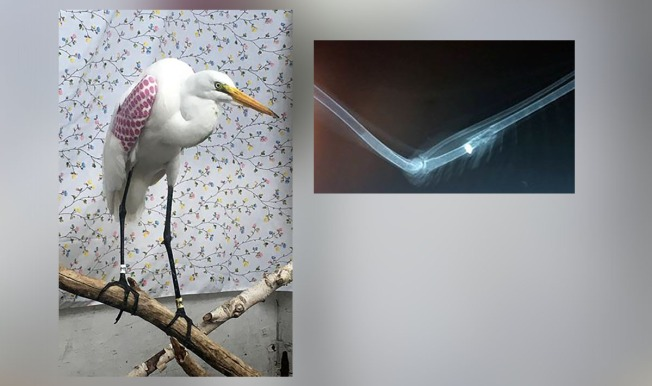 $500 Reward Offered for Help Finding Shooter Who Used Great Egret for 'Target Practice'