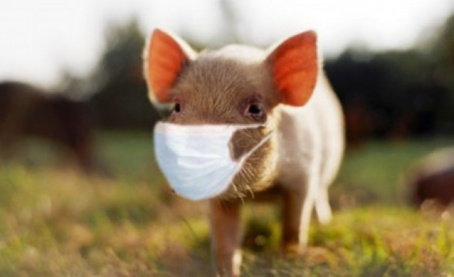 Swine Flu Resources