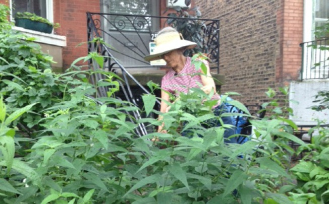 Why Is This Gardener Suing  Chicago?