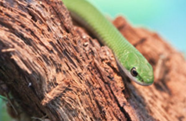 Zoo Releases Snakes into Forest Preserve