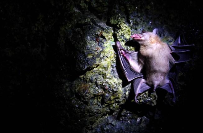 Rabid Bat Found Hanging Under Trampoline