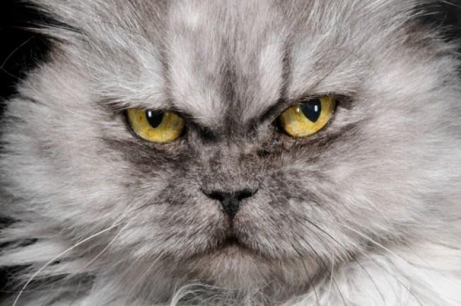 Owner Calls 911 After Cat Goes Berserk in Florida Home