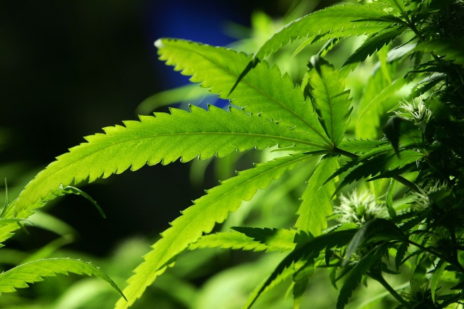 First Church of Cannabis Approved After Passing of Indiana's New Religious Freedom Law