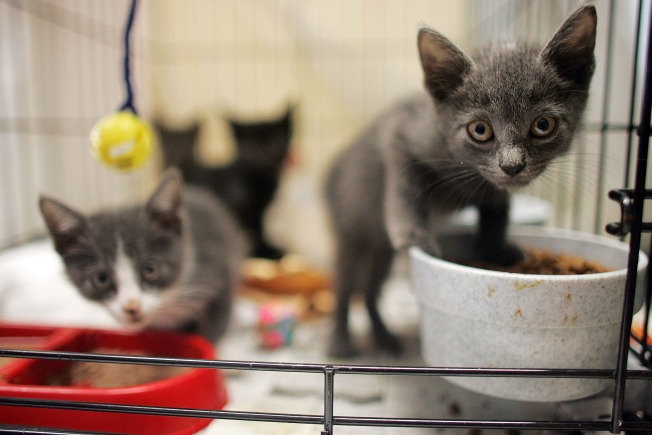 Cat Food Recalled