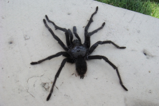 Naked Man Flees Home After Finding Spider in Bed