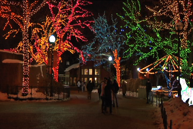 Lincoln Park Zoo Sets Attendance Record for Holiday Season